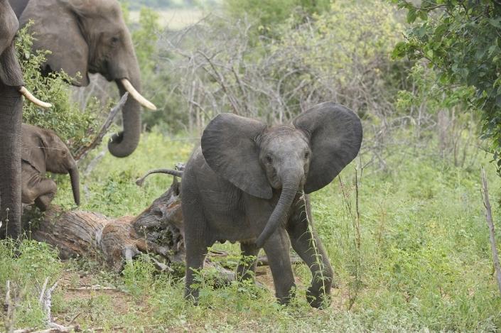 Luxushotels Sanctuary Chief´s Camp Botswana Reisegalerie|