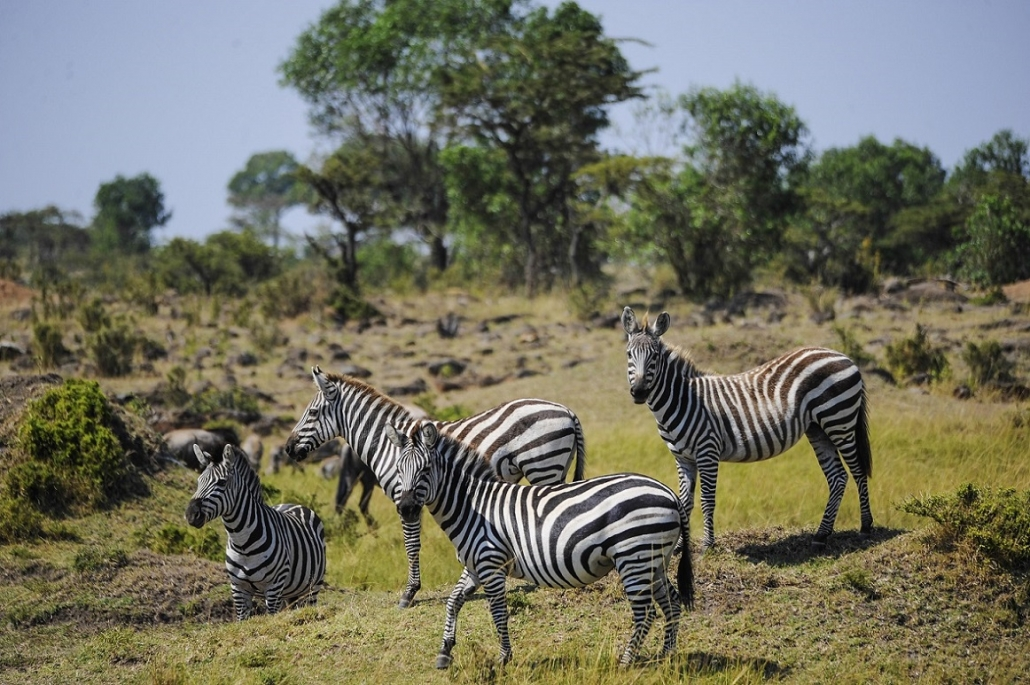 Luxushotels Diamonds Dream of Africa Kenia Reisegalerie|