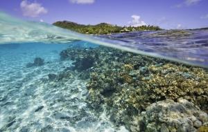 Pacific Resort Aitutaki Tropical Fish Lagoon