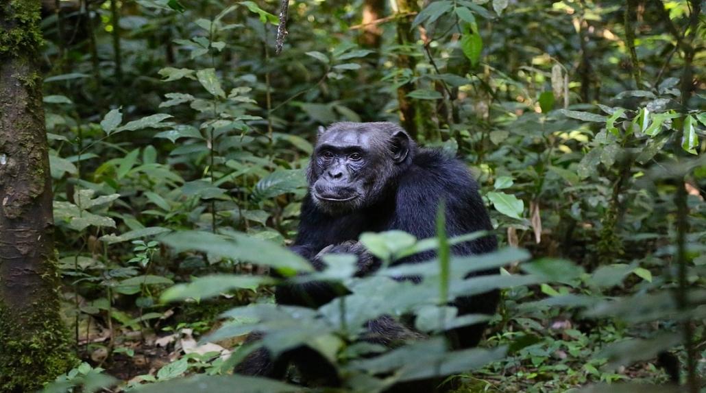 Erlebnisreisen - Uganda