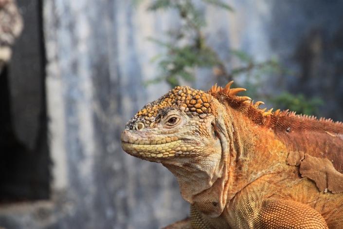 Erlebnisreisen Galapagos Reisegalerie