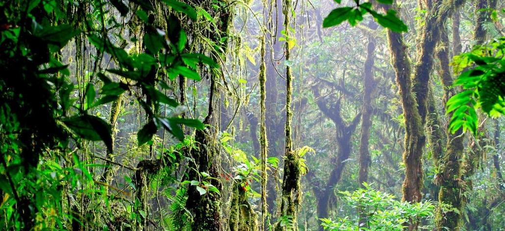 Erlebnisreisen Costa Rica Reisegalerie|