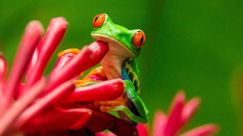 Handverlesene Luxushotels Mittel- und Südamerkika-Costa Rica